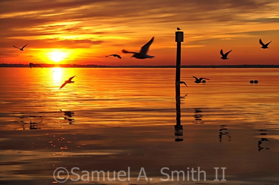 Seagulls following the sunset